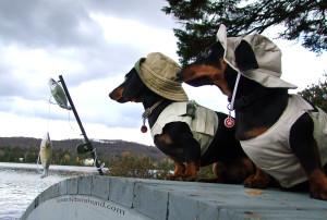 Dachshund Fishing with Fishing Costume