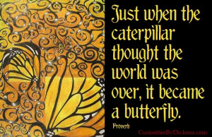 It became a butterfly…