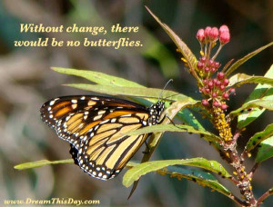 Without change , there would be no butterflies .