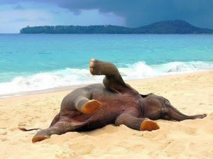 Baby elephant playing on the beach. Cute animal pictures of the day.