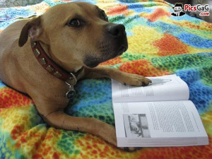 terms funny animal quotes for reading books poto of a dog reading book