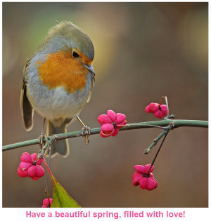 Best Wishes for My Friends in Spring [beautiful bird picture]