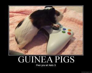 If Guinea Pigs can outplay humans, then humans are pathetic.