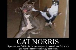 Martial Art Cat
