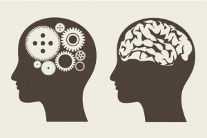Head and brain graphic by ThinkStock