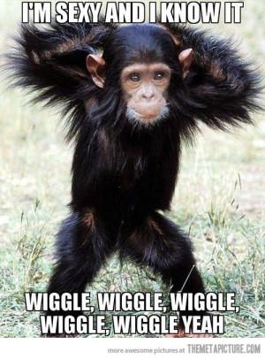 Funny Monkeys Dancing (6)