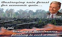 Burned deforestation photo+quote Destroying rain forest for economic ...