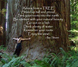 Motivational Quote By Ilan Shamir on Nature: Advice from a tree Stand ...