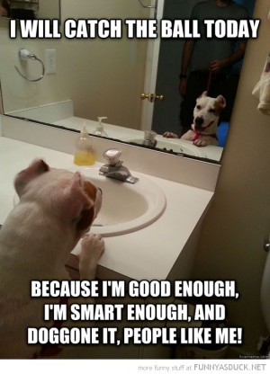 self motivation dog animal mirror will catch ball funny pics pictures ...