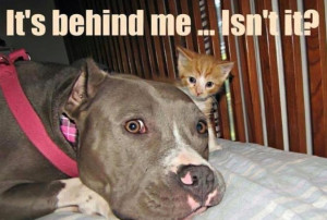 Funny PitbullFunny Pictures, Dogs Cat, Pitbull, Pets, Pit Bull, Funny ...