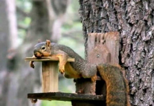 Funny Squirrel (73)