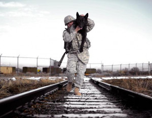Titanium Canines and Dog Earbuds: Special Forces Dogs of War