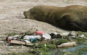 Pollution on seashores and the open ocean is increasing