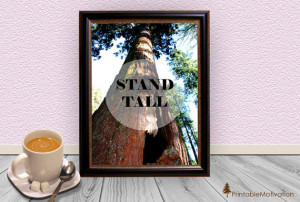 Stand Tall Photo Quote Print - Redwood Tree Photo - Typography Art ...