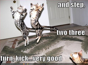 funny pictures of animals doing funny thing