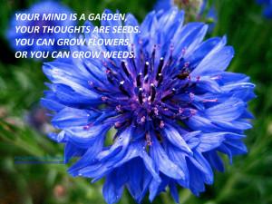 ... button, Basket flower, Boutonniere flower, Cornflower 3 Bloom Quotes