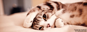 Top 5 Cat and Cute Kitten Facebook Timeline Cover Photo Free Download ...