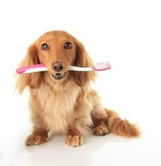 ... floss everyday! #Dentist #Dental #Hygienist #Dentaltown #Quotes More
