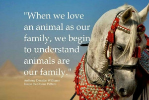 love all my pets as my family!