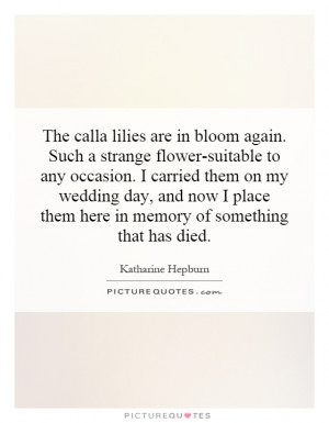 The calla lilies are in bloom again. Such a strange flower-suitable to ...