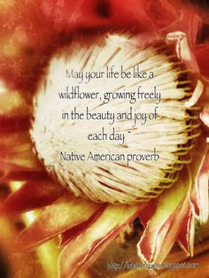 native american proverb more nativeamerican native american proverb 6 ...