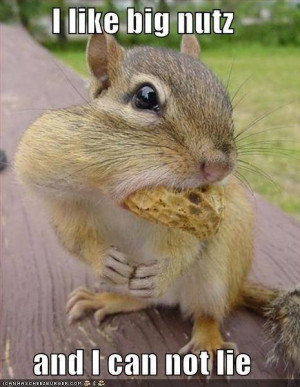 They just tryin' to get a nut like squirrels in his mad world