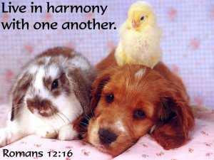 bible-quote-live-in-harmony-with-one-another.jpg#live%20in%20harmony ...