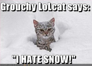 severe-weather-alarm-snowcat.jpg