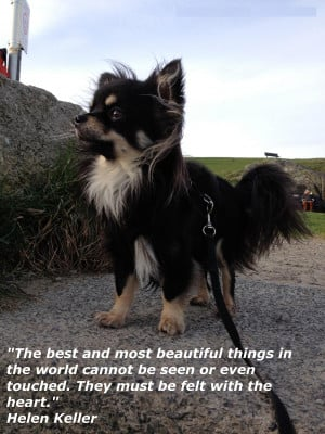 A Beautiful Heart Quotes Beautiful Animal Quote...