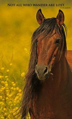 Wild Horses Quotes