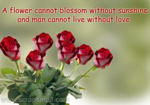 Flowers Scraps, flowers quotes, Beautiful rose flower, flowers orkut ...