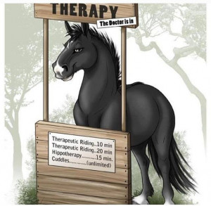 downloads miscellaneous horse information funny horse image for ...