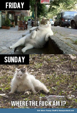 drunk cat weekend lolcat animal meme funny pics pictures pic picture ...