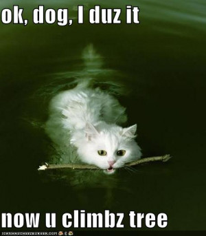 My Top Collection Funny cat and kitten pictures 2