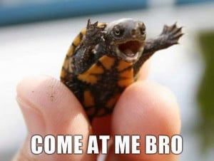 Turtles, 12 funny Turtles, The turtle animal, 12 Ways to love The ...