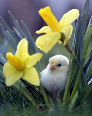 Spring is in the air! Famous quotes about springtime