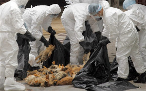 ... Center > Health & Science > Bird Flu Claims Another Life In Hong Kong