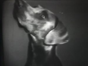 William Wegman Man Ray