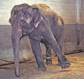 Forced to perform in circuses, read Lota's story .