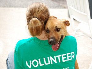 How can you measure the volunteer's contribution to your shelter?