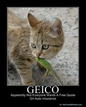 Lacertid Pays The Price For Being Mistaken For A Gecko; Thanks Geico