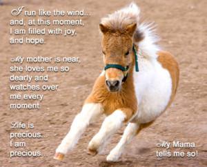 Edwin is a little baby miniature horse. He is a little ball of dynamic ...