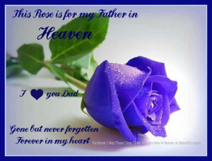 This Rose for my father in heaven