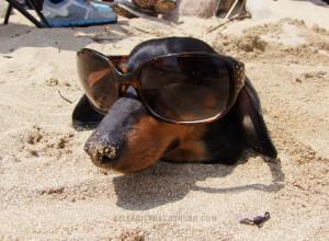 Funny Dachshund Sunglasses