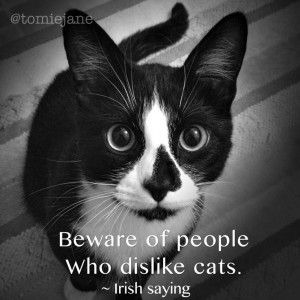 Beware of people that dislike cats. ~ Irish saying (Sully)