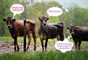 Funny Farm Animal Friday...