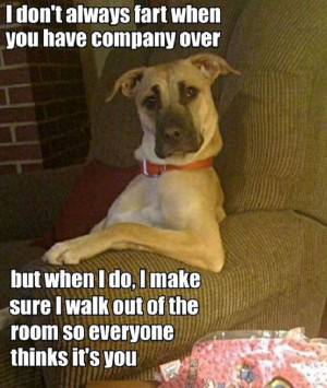 Funny Farting Dog