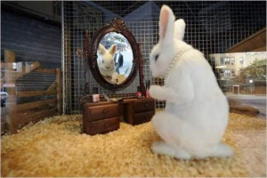 Funny Rabbit Makeup