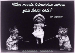 The 52 Funniest Cat Quotes