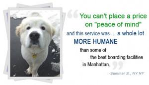 dog boarding in new york